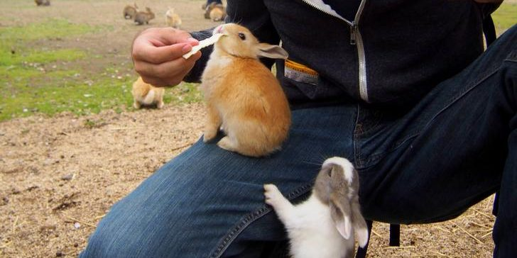 xfbsddi e1556435439999.jpg - 55 Adorable Pictures of Bunnies That Will Boost Up Your Energy For The Day