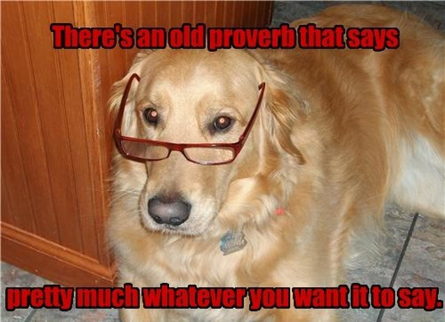 Dog wearing glasses. Caption: There