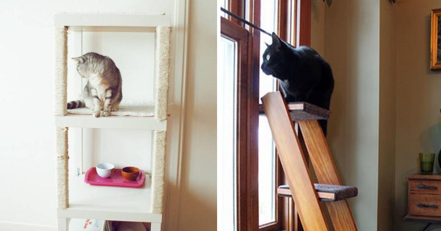a6 1.jpg - 22 Truques que todas as pessoas que têm gatos precisam saber