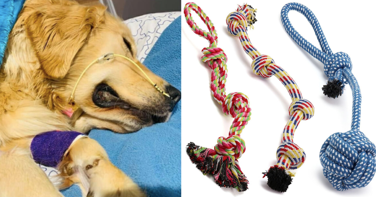 d3 18.png - A Devastated Owner Warned People About Rope Toys After Her Golden Retriever Passed Away