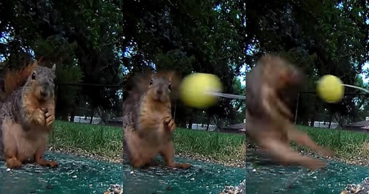 e696b0e5bbbae9a1b9e79bae 5 2.png - お腹が空いているリスを誘引して、おもちゃのボールを打つ映像を公開したユーチューバー