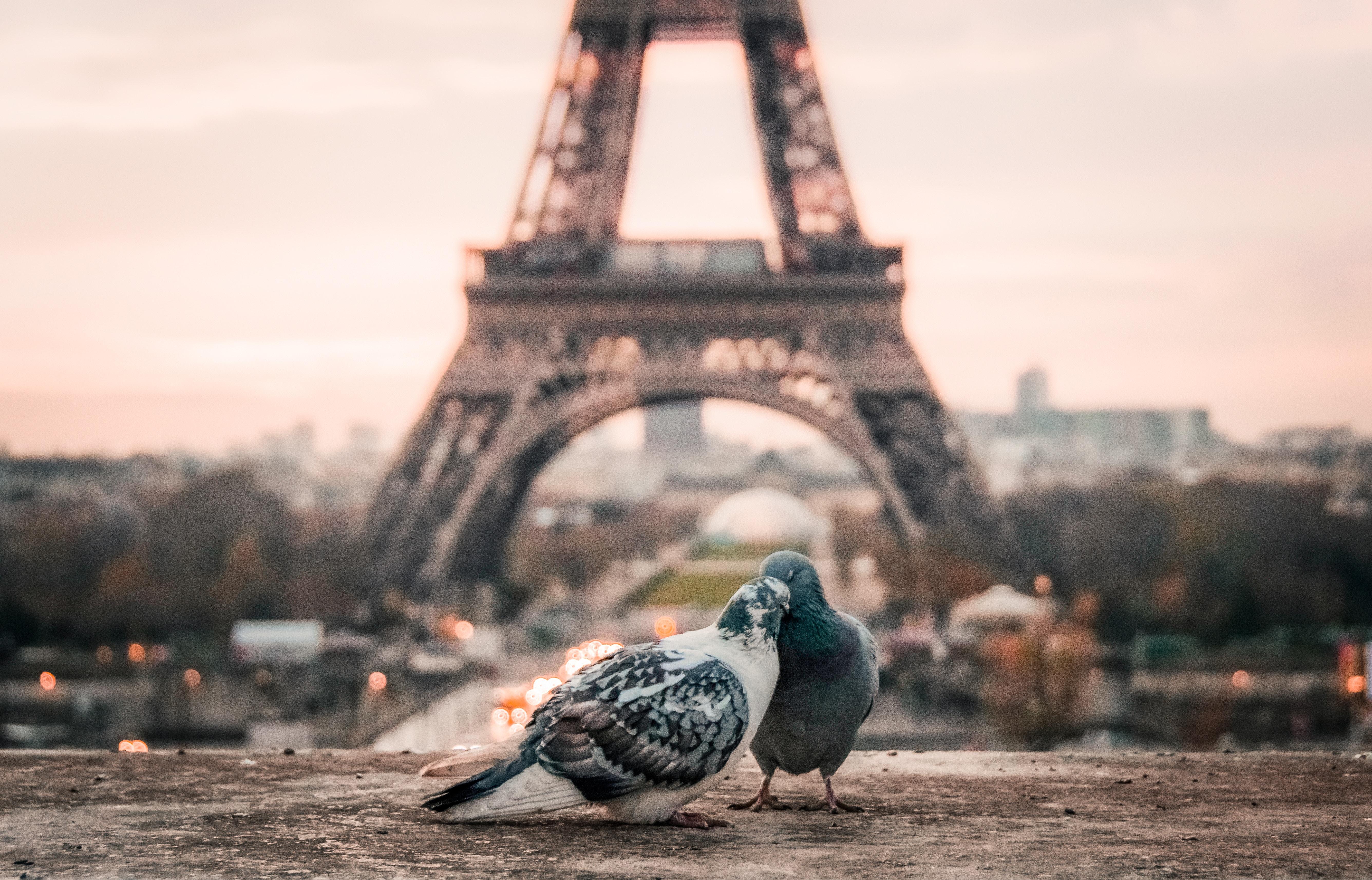 fabrizio verrecchia 195644 unsplash.jpg - Des images magnifiques: Un coup de foudre à Paris