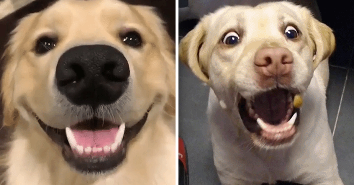 happy dog.jpg - 20+ Signs That Shows You're Dog Is Truly Happy