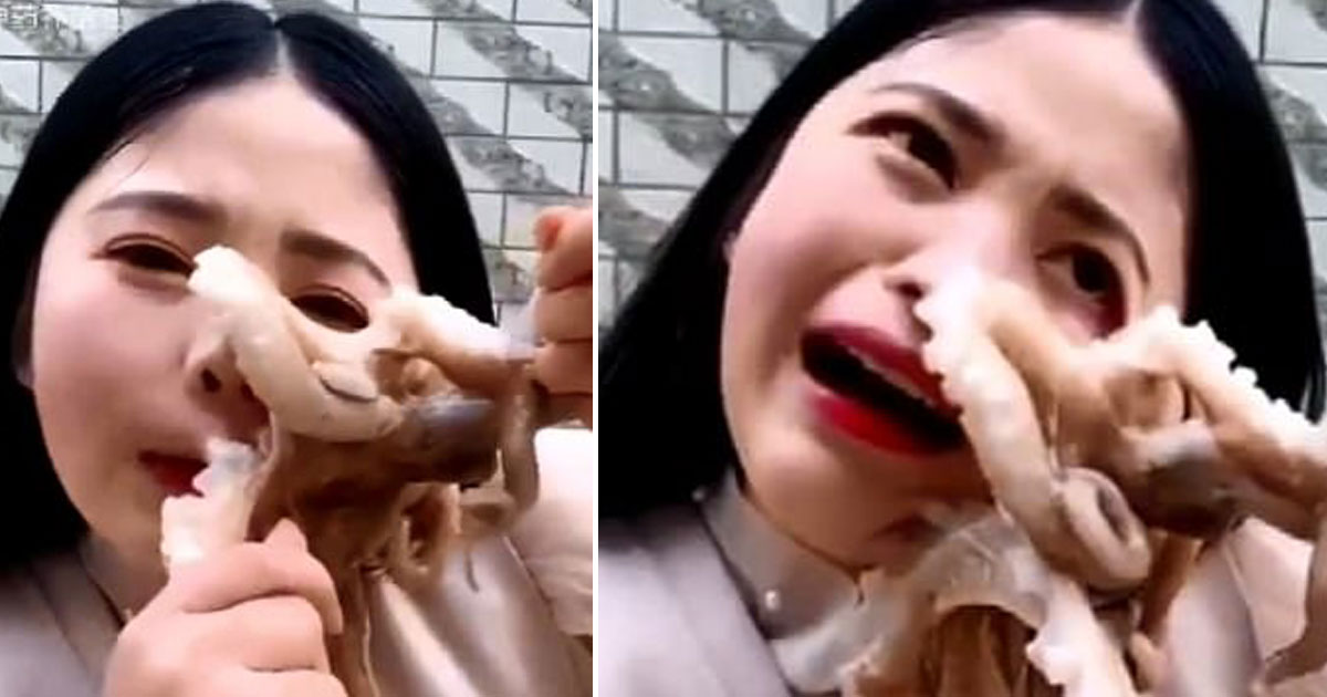 octopus sucked blogger face.jpg - Octopus Sucked Onto Blogger's Face After She Tried To Eat It Alive
