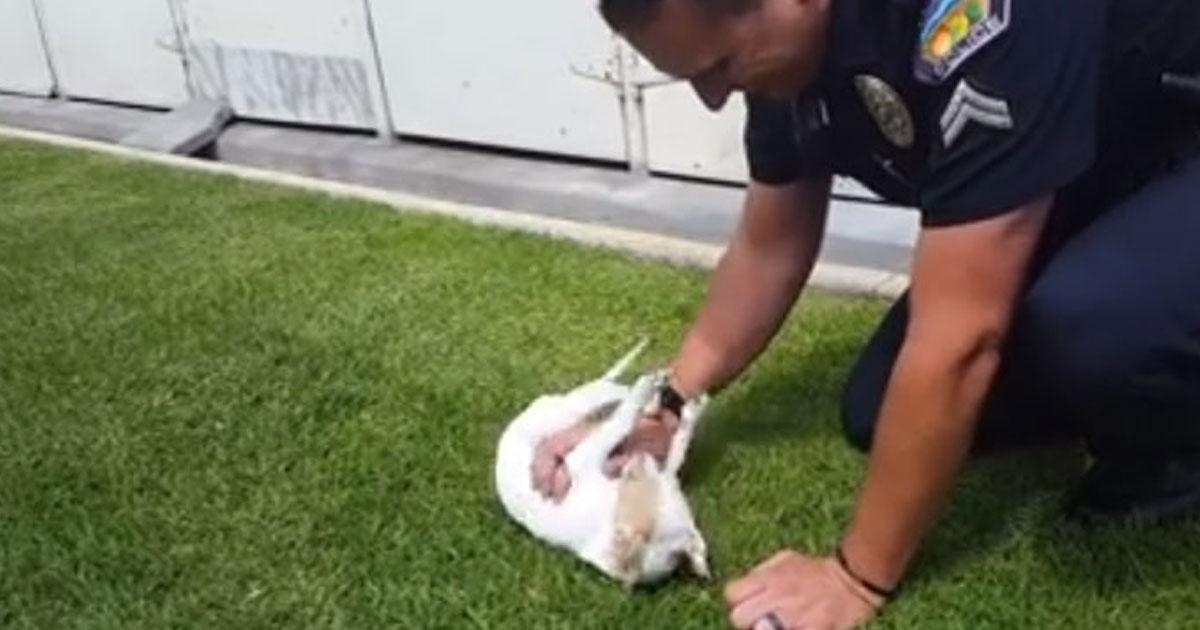 officer dog reunion.jpg - Un agent de police rend visite au chiot qu'il a sauvé en mars, celui-ci le reconnait immédiatement !