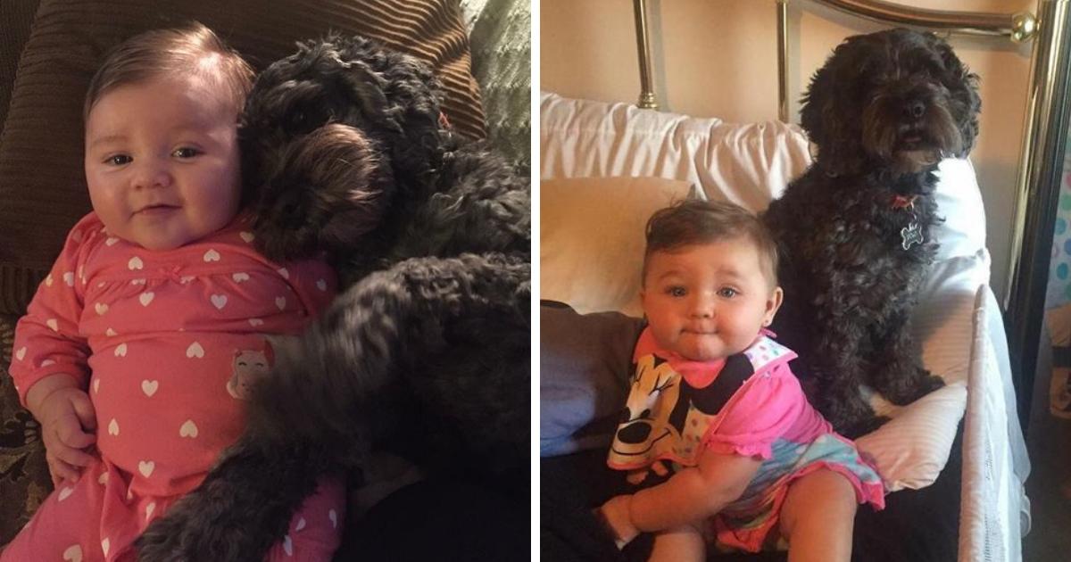 polo6.png - Un chien donne sa vie pour sauver une fillette du feu à cause d'une bougie