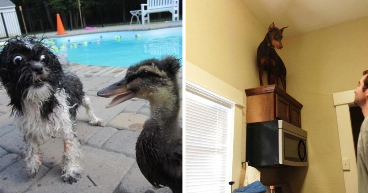 scared dogs.png - 30+ Dogs Who Are Scared Of Everything And Anything