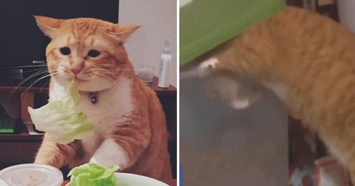 7 46.jpg - 고양이 다이어트 시킨 집사가 새벽에 발견한 놀라운 장면.gif