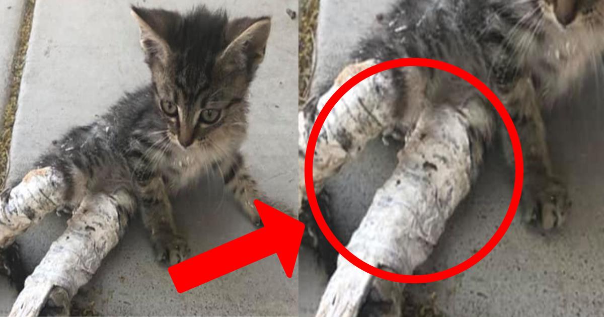 e696b0e8a68fe38397e383ade382b8e382a7e382afe38388 4 4.png - ケガをしたのかと思ったら、その理由にショック・・・脚にギプスをはめた子猫