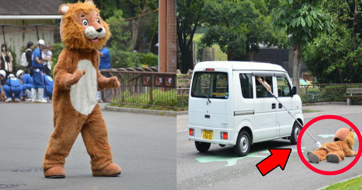 lion.png - 愛媛の動物園のライオン捕獲訓練がツッコミどころ満載?「誰が見ても人じゃん」