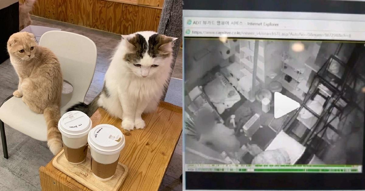 """1 309.jpg - """"최소 7마리를 '학대'해 죽인 '고양이 카페' 사장을 고발합니다"""" (영상)"""