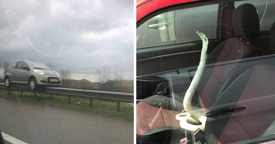 a9 5.jpg - 17 das coisas mais bizarras que as pessoas viram nas estradas