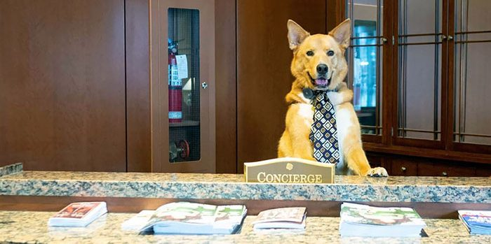 cute dogs with jobs 73 5cd58ee07aaf1  700 e1564497454888.jpg - 40 Smart & Adorable Dogs Who Have Real Jobs