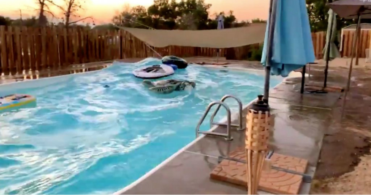 d2 6.png - Water In Swimming Pools Trembles As Earthquake Hits California