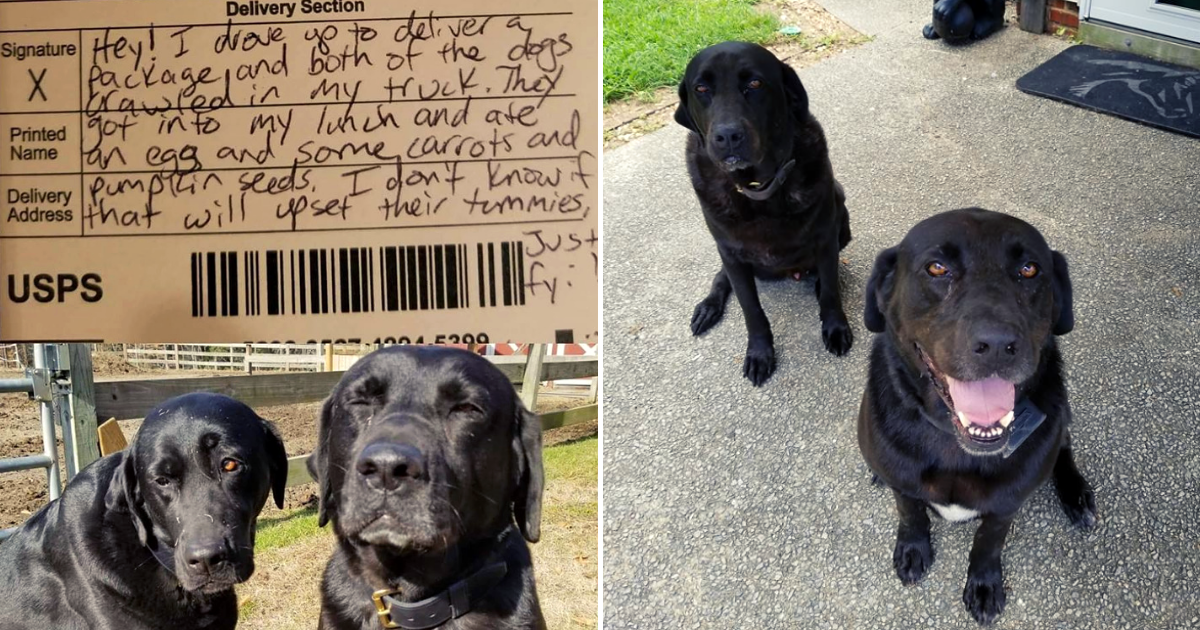 dogs2.png - Dogs Sneak Into Mail Carrier's Truck And Steal His Lunch, Send The Most Adorable Apology
