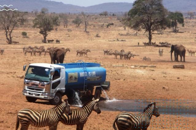 Un homme généreux apporte de l'eau aux animaux sauvages qui souffrent de la  sécheresse - Vonjour