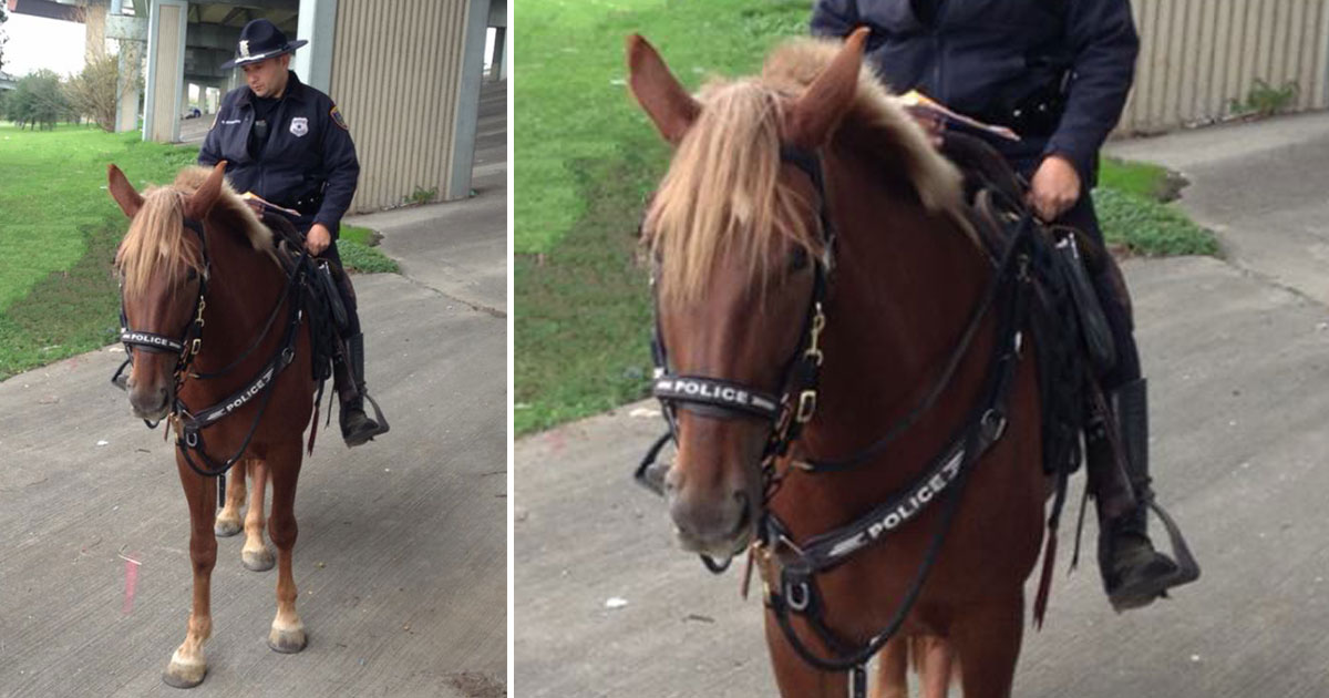 police horse died.jpg - Heartbreaking Moment A Police Officer Comforts A Police Horse During Its Final Moments