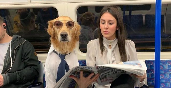 50196211 10157096419267608 4602508364805570560 o 5c54bf5880b6b  700 e1566270181753.jpg - 22 Pictures Of Incredible Bond Between Human&Dog