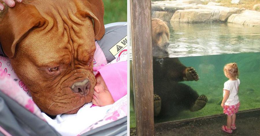 a4 17.jpg - 29 Fotos provando que crianças e animais podem ser melhores amigos