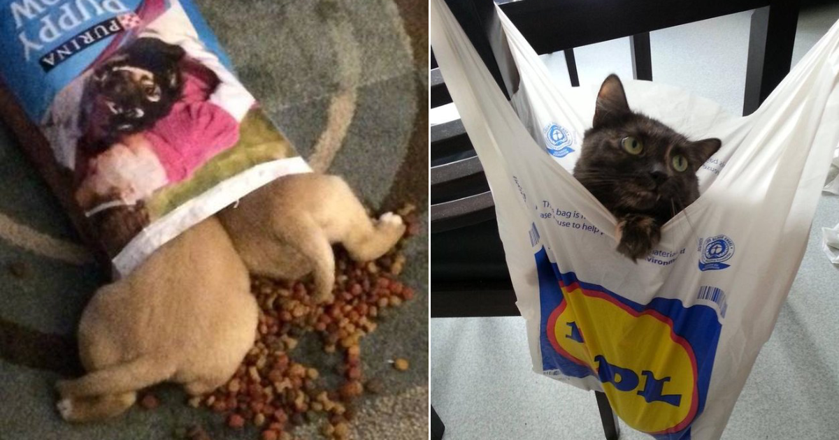 bags.png - 20+ Pets Who Are Absolutely Obsessed With Bags