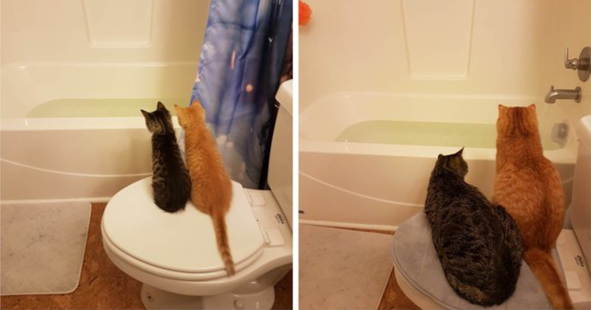 before and after.png - 20+ Adorable Before and After Photos Of Kittens All Grown Up