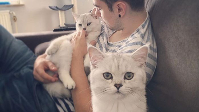 cat dads cute cats 90 5cb05d08b91dd  700 e1565361695901.jpg - 30 Pictures Of The Most Adorable Cats With Their Life Duo