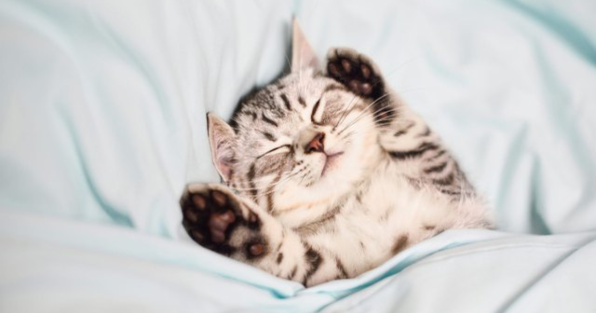 cute catto.png - 15+ Photos Of Cats That Will Definitely Brighten Your Day