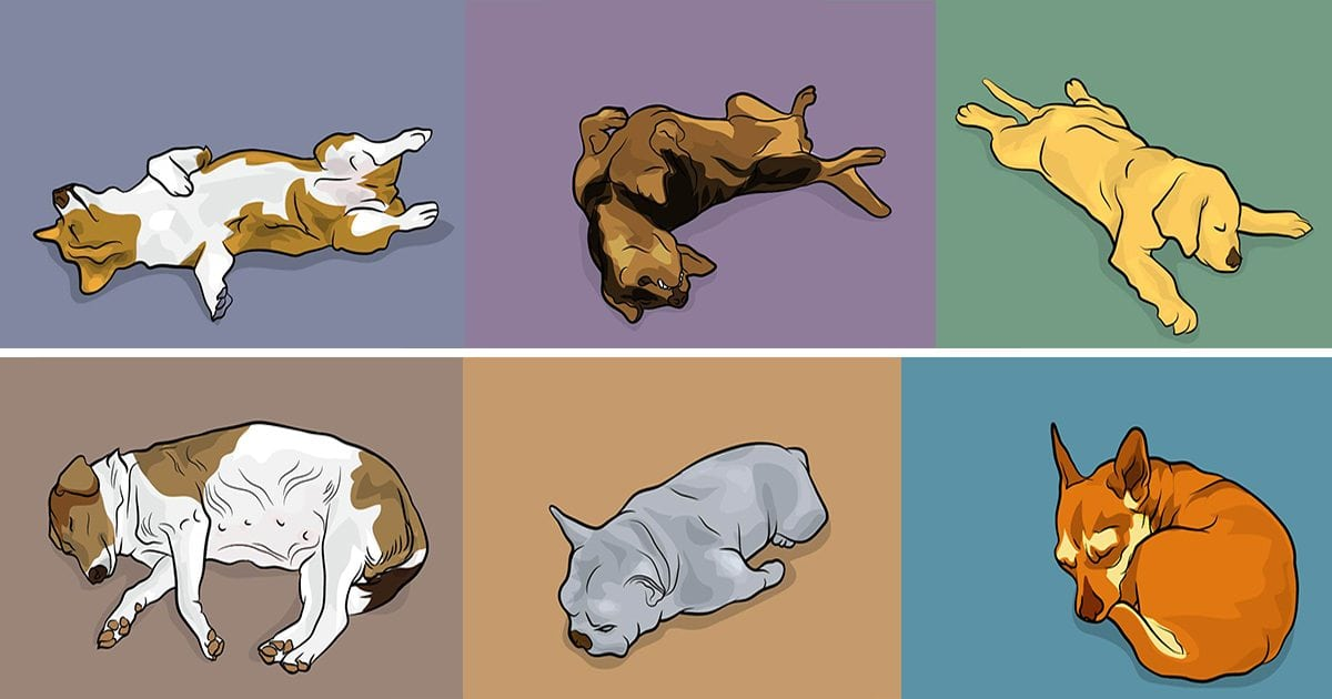 dog positions.jpeg - Meanings Of 50+ Different Dog Behaviors, Sleeping Positions, And Faces