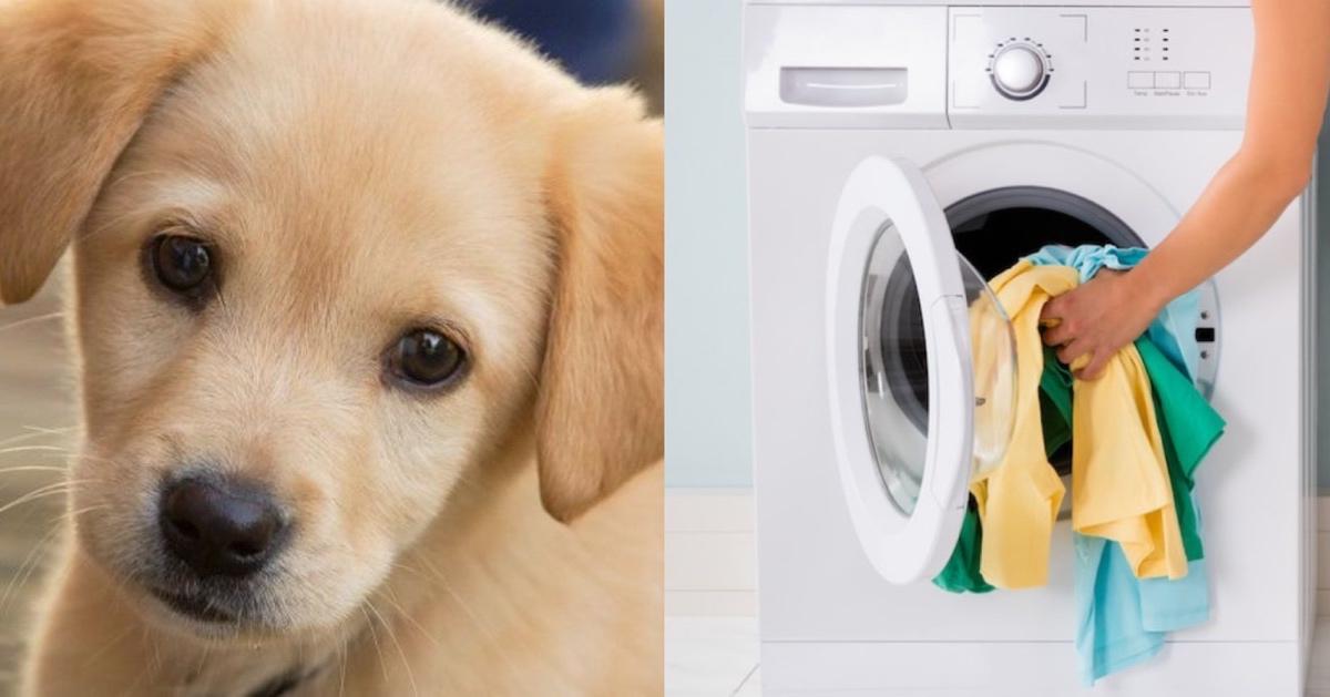 img 4810.jpg - 【最低】畜生すぎる鬼の飼い主!!子犬を衣類乾燥機に放り込み回転