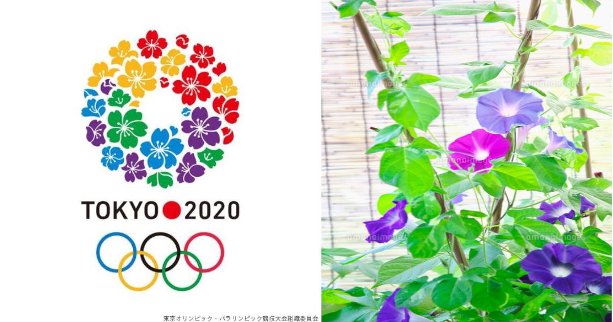 olympic.png - 効果ナシ⁈ 東京五輪で暑さ対策でアサガオの鉢…逆効果の可能性も