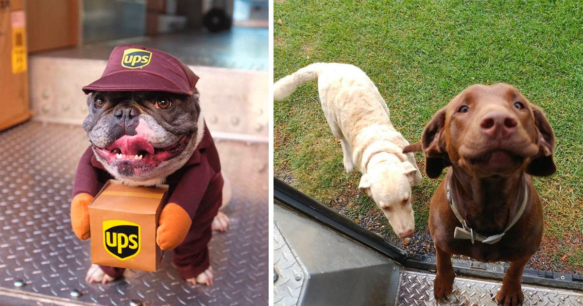 ups drivers.jpeg - 30+ Of The Most Adorable Photos UPS Drivers Have Taken Of Dogs On Their Delivery Job
