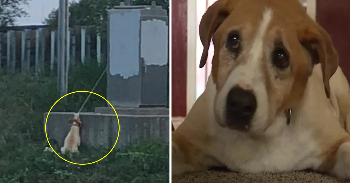 vvv 1.jpg - This Dog Was Hanging With An Electrical Cord, See How A Man Saved His Life
