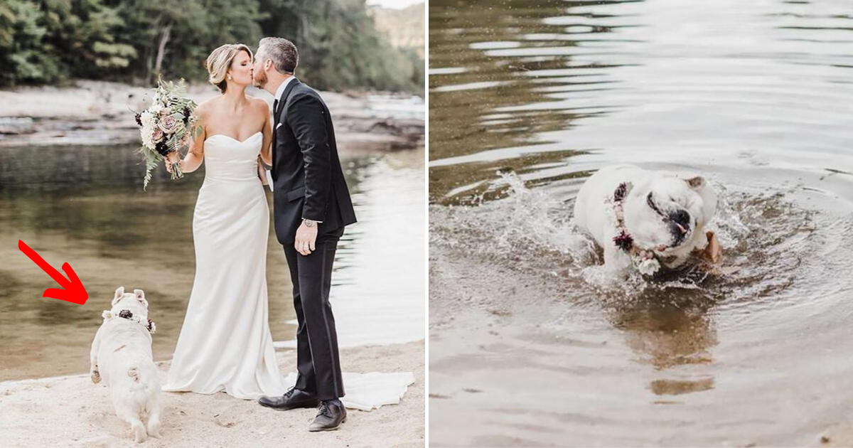 bernie7.png - Dog Refuses To Take Owners' Wedding Day Seriously And Keeps On Stealing The Show