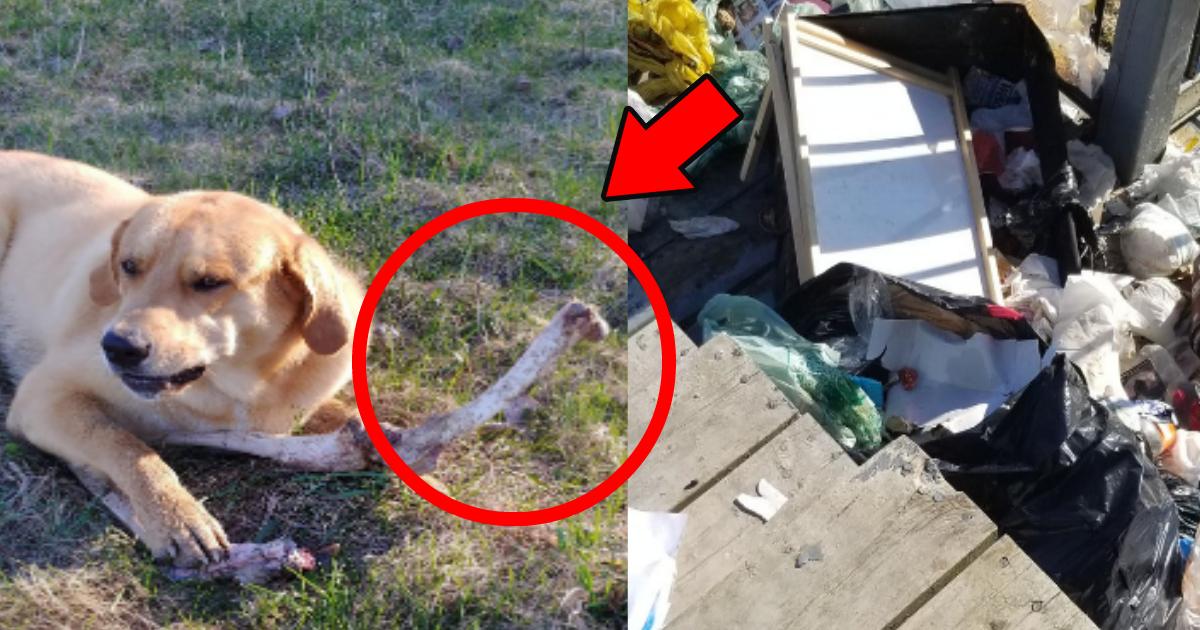 hone.png - 野生の熊が犬に動物の骨を渡しゴミを散らかしたのを見逃してもらった?