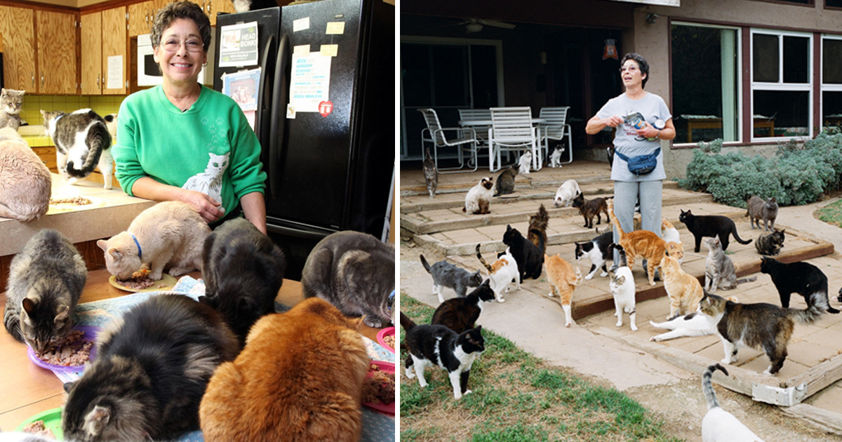 qa.jpg - Woman Hailing From California Claim She Lives In Her 6 Acre Home With 1,000 Cats