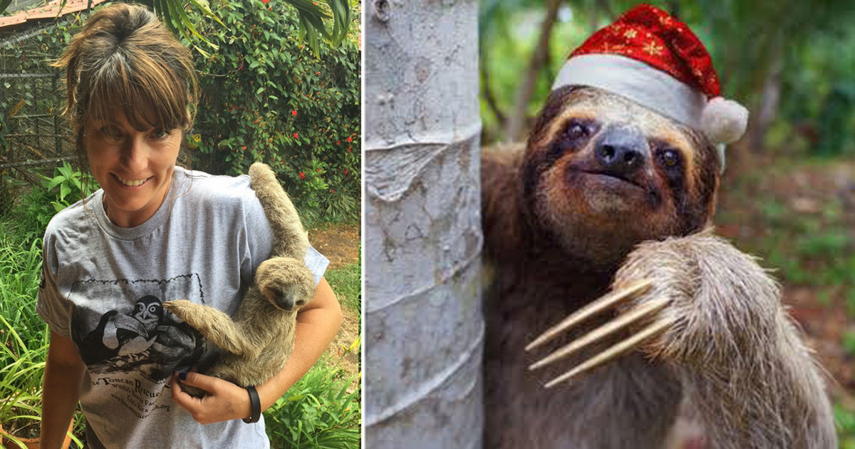 sloth calendar.jpg - A Photographer Travels To Costa Rica Every Year To Photograph Sloths For Her Calendars