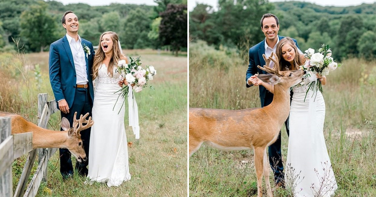 untitled design 39.png - Couple Had 'Fairytale' Wedding Shoot After Deer Joined Them And Ate Bride's Flowers