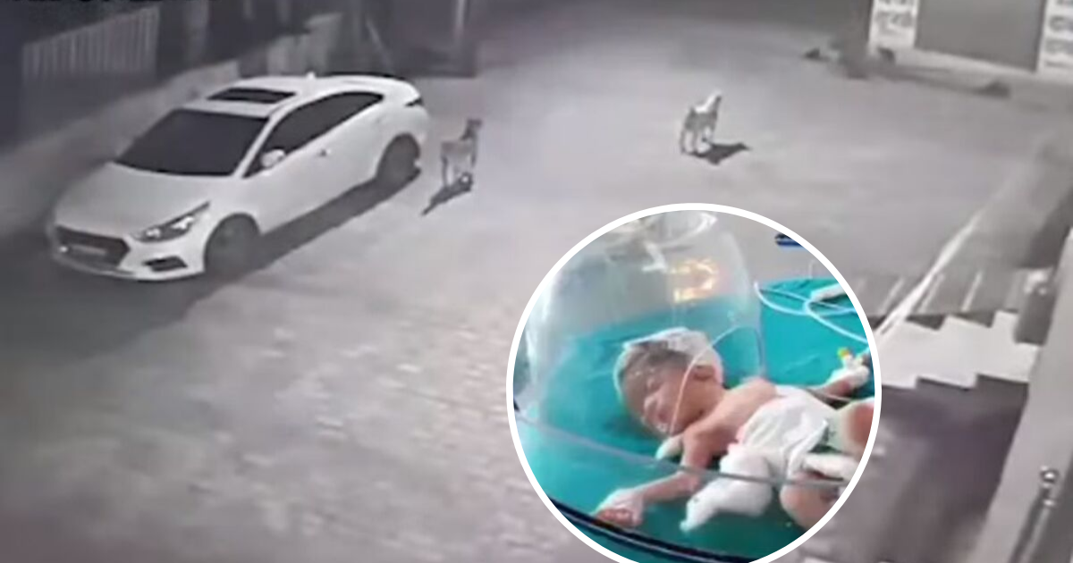 untitled design 66.png - Pack Of Stray Dogs Rescued A Baby Who Was Abandoned In A Drain