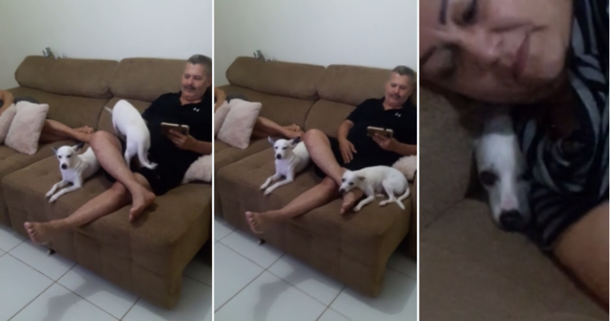 72912674 415402735789255 4151175132414476288 n.png - Guilty Dog Hilariously Hides After Being Interrogated For Eating Flip-Flops