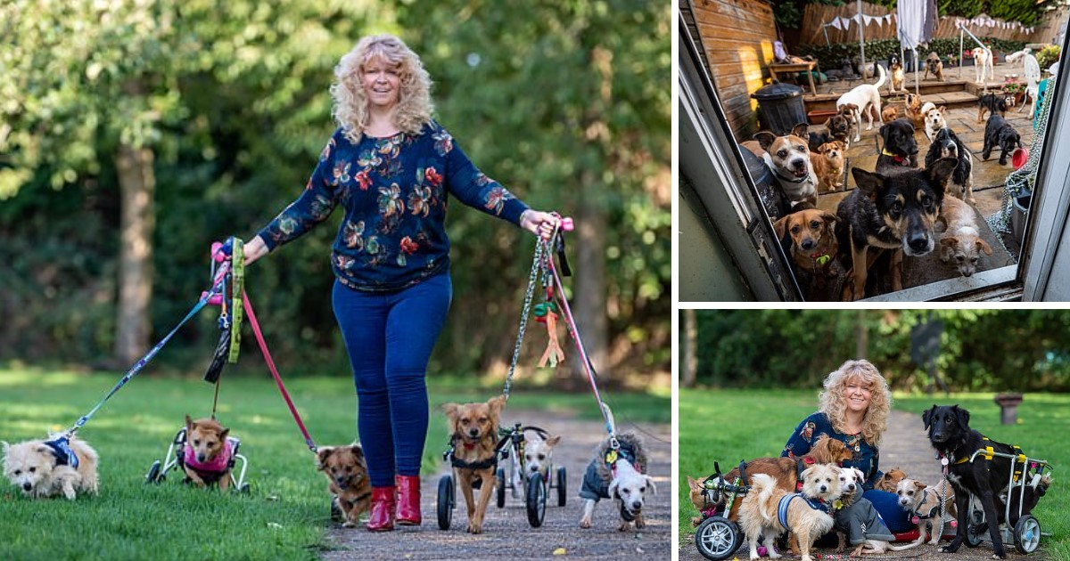 a 20.jpg - A 48-Year-Old Dubbed 'Miracle Worker' For Having Healed Disabled Dogs Shares Her Home With 27 Abandoned Dogs