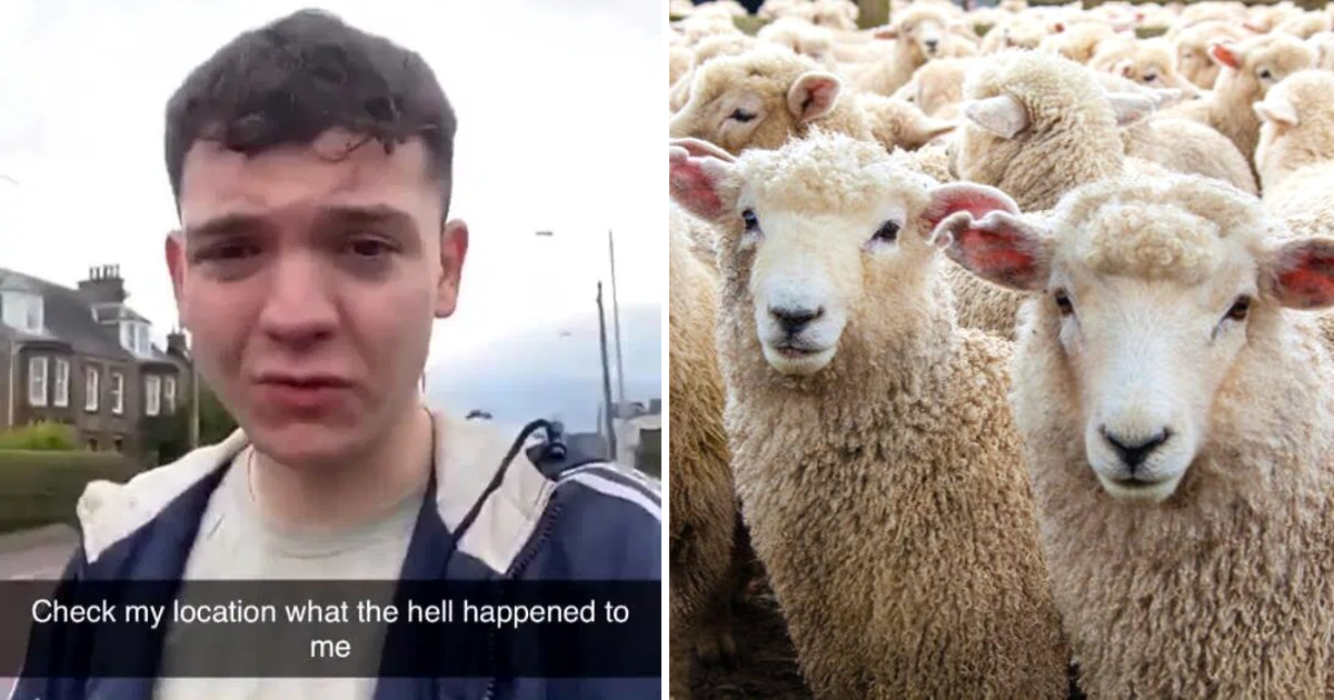 club6.png - 20-Year-Old Man Wakes Up 100 Miles From Home Surrounded By Sheep After A Night Out