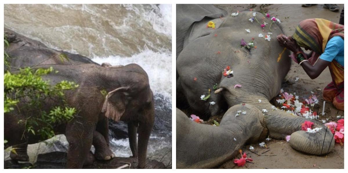 collage fotor 7.jpg - ゾウが次々と落ちて死ぬ滝 その原因は仲間を助けようとしたため?!