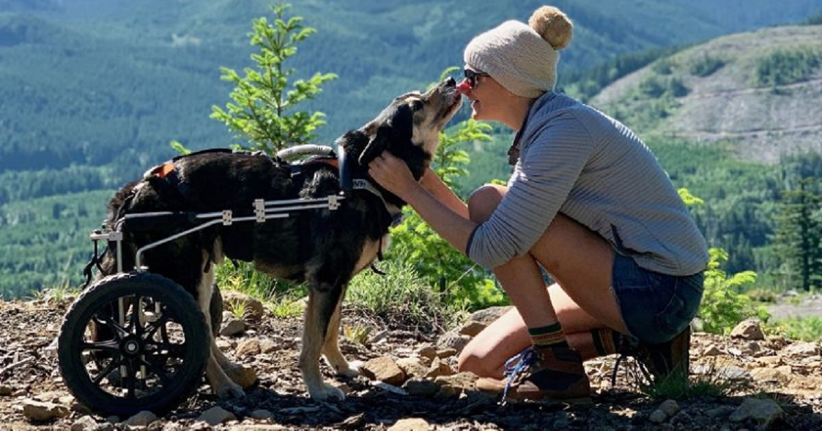 d3 3.jpg - Backpacking Dog Who Was Paralyzed Received A Doggy Wheelchair So He Could Continue His Travels