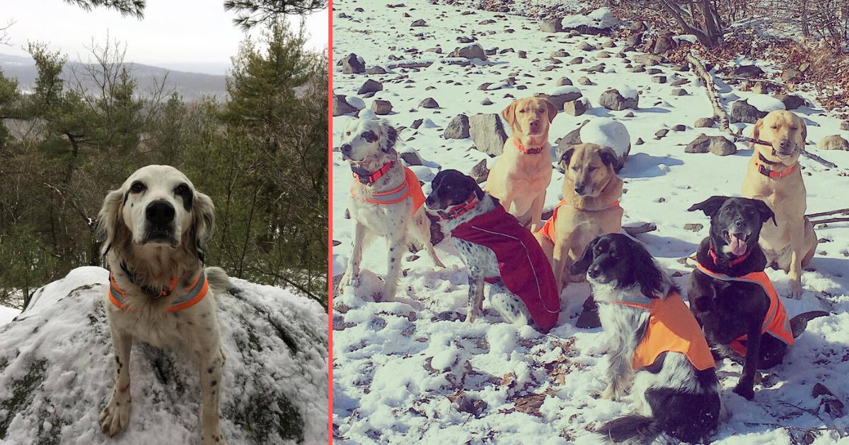 s 2 9.png - Un chien a donné sa vie pour sa famille d'une manière héroïque