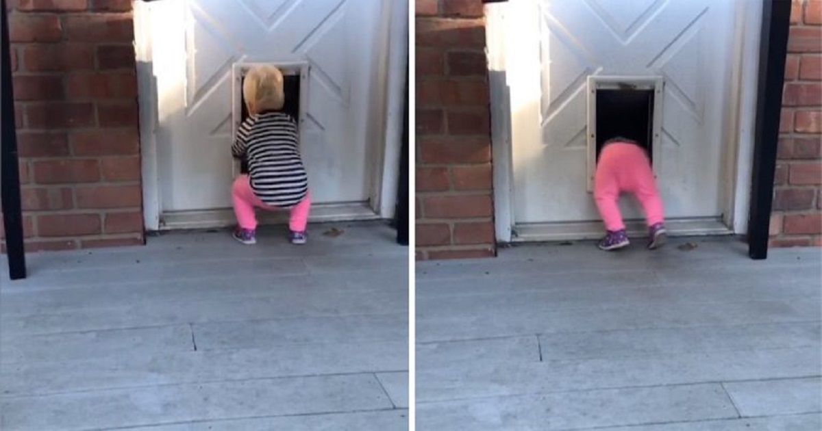 t3 2.jpg - Adorable Toddler Discovered The Wonders Of Dog Doors And Now She Can't Stop Using It