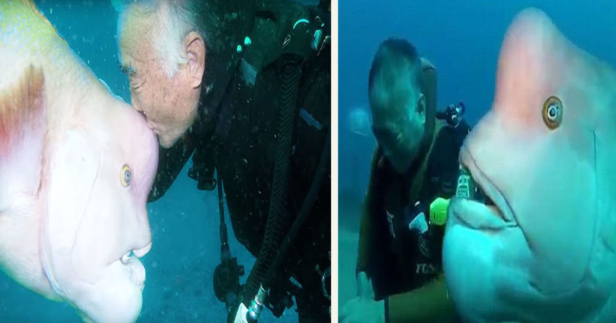 untitled 1 30.jpg - This Diver Has Been Visiting His Best 'Fish' Friend For 25 Years