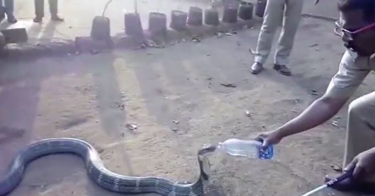 6 65.jpg - Cobra Quenches Its Thirst Smartly