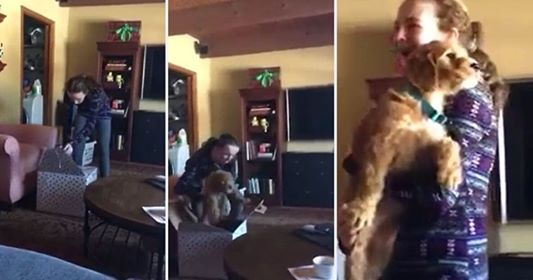74661774 471892123457341 1865079085747666944 n.jpg - Girl Starts Crying After Getting A Puppy As A Surprise
