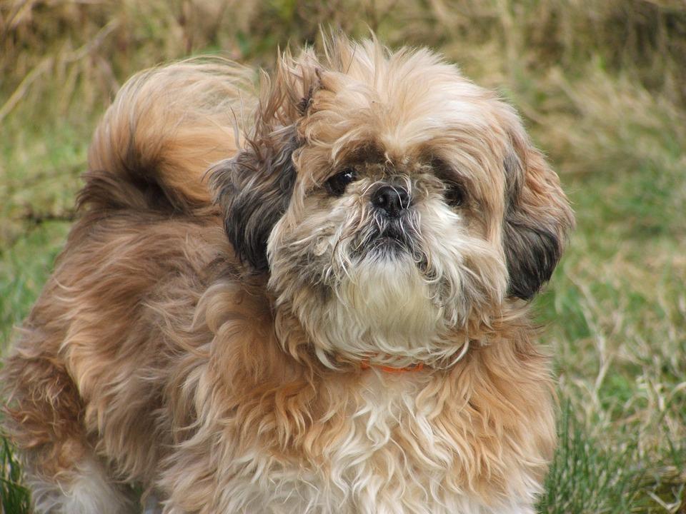 dog 6.jpg - Une ado décapite le chien de sa grand-mère et décide de garder sa tête dans sa chambre