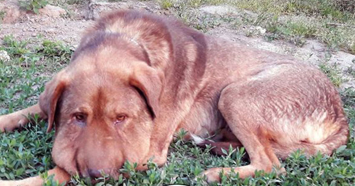 dog passed away.jpg - Dog - Who Was Tied Up With A Rope Around His Neck - Passed Away